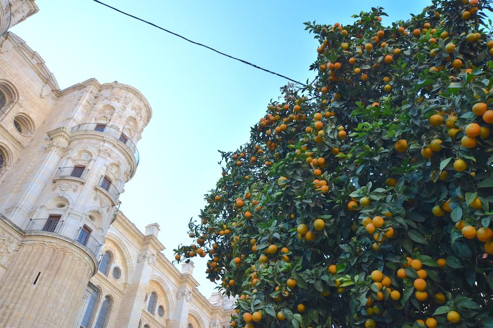 patio catedral malaga naranjos jardines