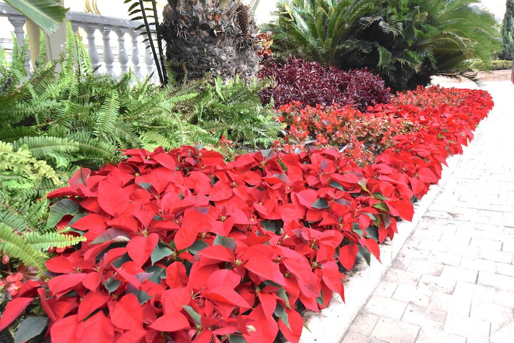 poinsettia town hall malaga gardens